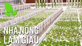 Nhà nông làm giàu | Tận dụng tài tình mô hình trồng rau kết hợp nuôi tôm bằng phương pháp thủy canh