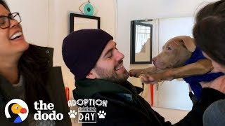 Pit Bull Puppies Were Found On The Street and Then Reunited Months Later | The Dodo Adoption Day by The Dodo
