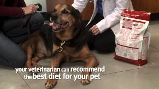 Creating A Weight Loss Plan For Your Pet