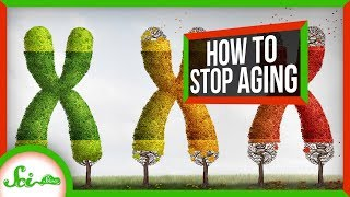 SciShow -  Why We Age - And How We Can Stop It