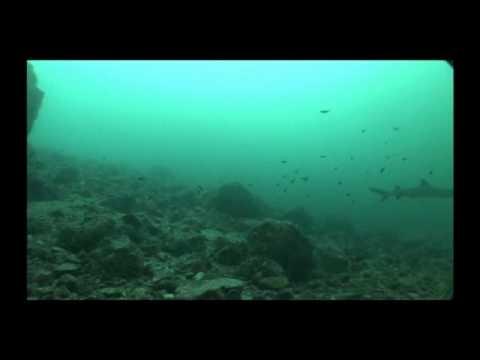 0 Gorgona island   COLOMBIA