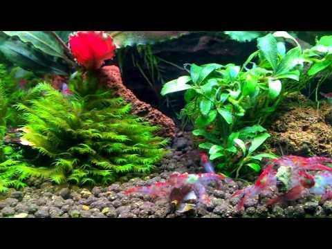 Aquarium 30L_Akvárium