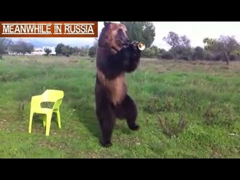 WATCH: Russian Bear Shows off His Tricks