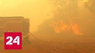 Природный пожар в Чили: 100 домов уничтожено, 19 человек пострадали