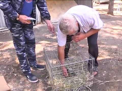 Житель Самары спас птенца сокола, выпавшего из гнезда