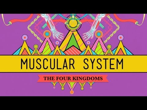 muscle - Hank tells us the story of the complicated chemical dance that allows our skeletal muscles to contract and relax. Crash Course Biology is now available on DV...