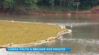 Remoção de algas de lagoa começa a dar resultado em Pederneiras