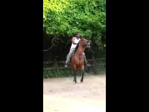 This trenton in philly riding horses