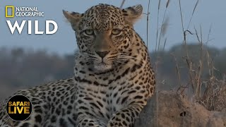 Safari Live - Day 355 | Nat Geo Wild by Nat Geo WILD