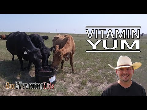 Vitamins, Minerals and Protein and Fly Control in Cattle Nutrition