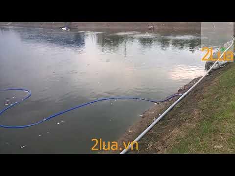 Lắp đặt máy sục oxy ao cá | Máy tạo oxy nuôi cá
