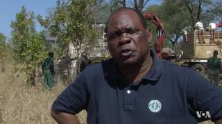 Malawi is relocating 500 elephants from the southern part of the country to a wildlife reserve further north. The goal is to rebuild...