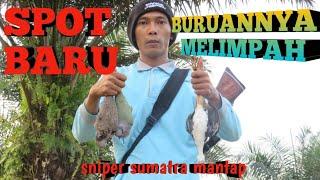 Video Sniper sumatra( berburu punai. ruak-ruak tekukur) MP3, 3GP, MP4, WEBM, AVI, FLV Januari 2019