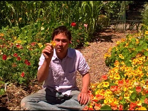 Garden tips - John from http://www.growingyourgreens.com/ goes on a field trip to Farm Girl Nursery in Novato, California. In this episode John will show you the amazing w...