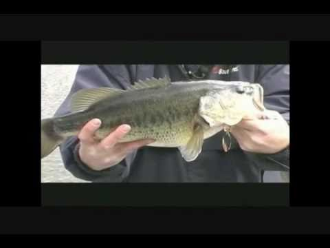THE BASS COLLEGE TROPHY BASS FISHING TIPS AND TACKLE
