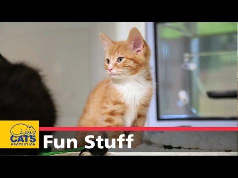 Терапия для кошек: расслабляет кошачье сознание