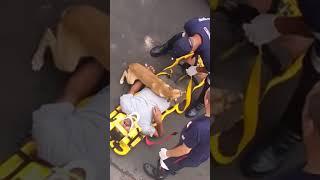 Pies próbuje ocalić swojego pana