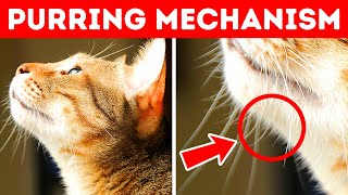 Video 40 Awesome Cat Facts to Understand Them Better MP3, 3GP, MP4, WEBM, AVI, FLV Juni 2019