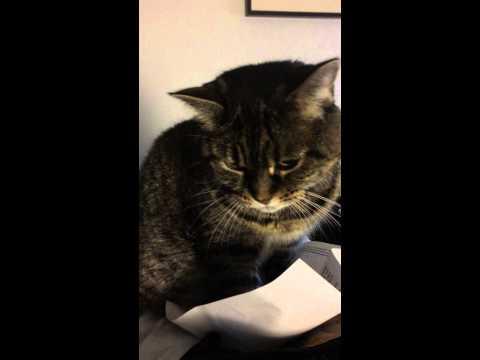 這隻在網路爆紅的貓有一個特別的喜好, 看他一臉嚴肅地撥弄紙張...讓人不禁想問:「你還好嗎?」
