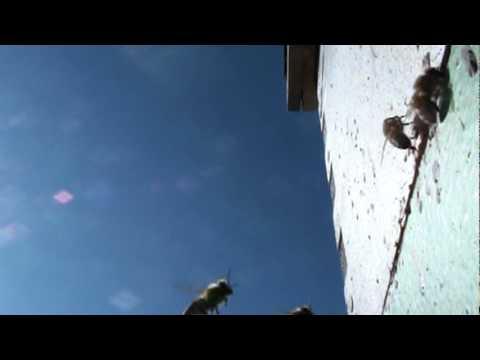 Beekeeping: Bees Landing In Slow Motion
