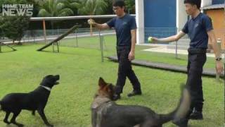 Nonton Adopt A Retired Police Dog Film Subtitle Indonesia Streaming Movie Download