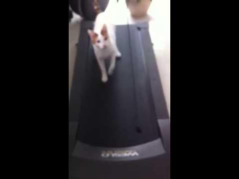 gatto sul tapis roulant: incredibile ma vero!