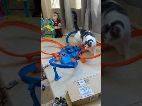 Cat Overwhelmed By Hot Wheels