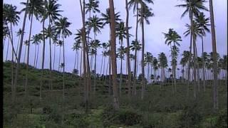 Taveuni Fiji  city pictures gallery : Taveuni Island, Fiji