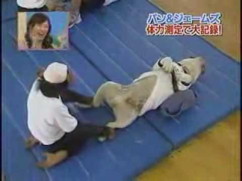 Cuộc thi gập bụng hài hước giữa khỉ, chó và người