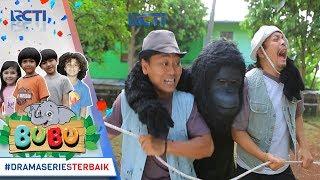 Download Video BUBU - Gorila Ini Berhasil Menyelamatkan Luna Dari Pemburu [9 OKTOBER 2017] MP3 3GP MP4