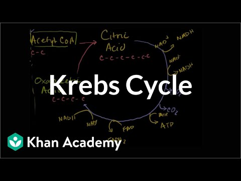 Krebs / citric acid cycle (video) | Khan Academy