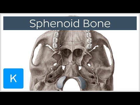 sphenoid video watch hd videos online without registration, Human body