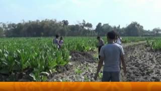 Video Geger! Petani Tembakau Menggali Tanah Untuk Buat Sumur, Temukan Harta Karun - Wajah Indonesia 07/08 MP3, 3GP, MP4, WEBM, AVI, FLV Mei 2017