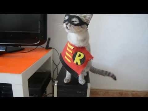 Video Parodia Batman vs Superman Parody download in MP3, 3GP, MP4, WEBM, AVI, FLV January 2017