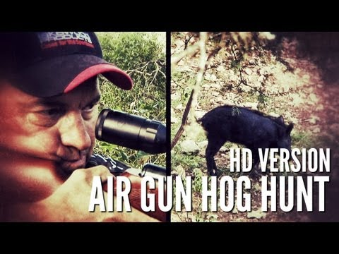 .25 cal airgun - This little piggy went to market! Keith is using a GAMO Hunter Extreme .25 caliber to take out a good eating hog in the Texas Hill Country. NOTICE: This is a...