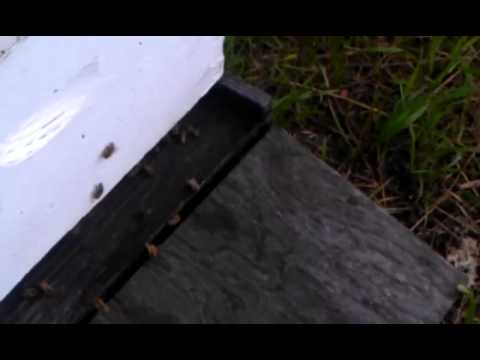 Beekeeping in Canada