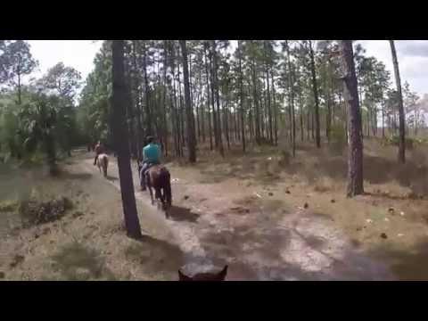 Horseback riding at Rock Springs Run Trail Ride Florida
