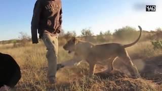 Video Hewan ini Membunuh & Memangsa Pelatihnya Secara Sadis Tertangkap Kamera ! Jangan Dekat-Dekat ! MP3, 3GP, MP4, WEBM, AVI, FLV Januari 2018