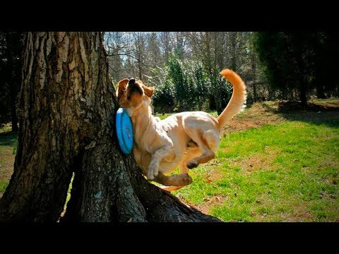 Funny cat videos - Funny Pets Fails  Funny Dogs Who Fail at Being Dogs (Part 2) [Funny Pets]