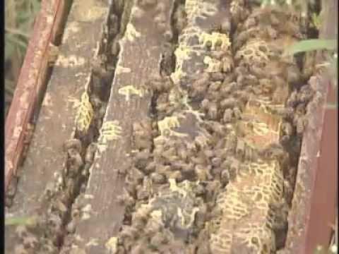 Mobile Beekeeper