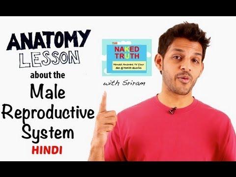 Video Male Reproductive Anatomy Lesson- Hindi download in MP3, 3GP, MP4, WEBM, AVI, FLV January 2017