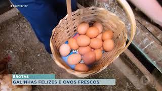 Família cultiva produtos orgânicos há mais de 70 anos em chácara de Brotas
