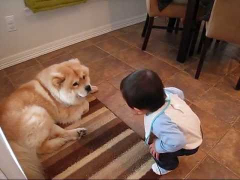 Baby making interesting conversation with dog [Original] — so funny, dog and baby