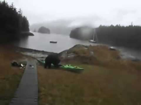 """Woman maces a bear then begs it not to Rip apart her kayak """"please stop"""""""