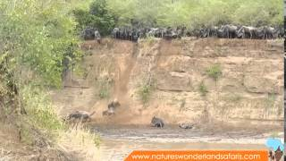 Video Wildebeest Migration in Kenya Masai Mara Part 2 MP3, 3GP, MP4, WEBM, AVI, FLV Desember 2018