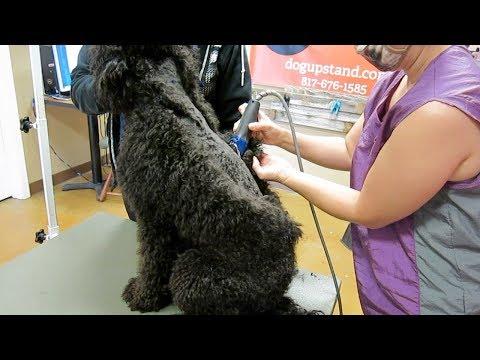 Short haircuts - Dog Extremely Matted Short Haircut