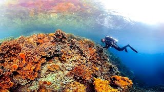 Palau's vibrant corals are thriving, despite some of the warmest and most acidic waters in the world. In this virtual reality...