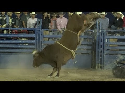 Video Bucking Battle for the Cure download in MP3, 3GP, MP4, WEBM, AVI, FLV January 2017