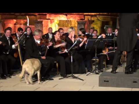 Stray Dog Wanders Onto Stage During Orchestra