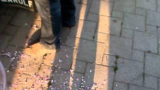 #341 Apfelzüchtung 3v10 - Herstellung des Pollens